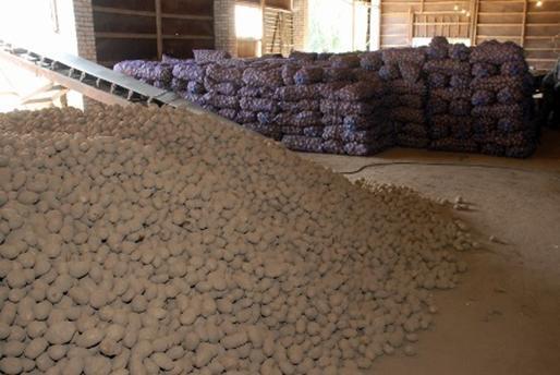 Реферат картоплярство україни